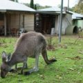 Come and find me…at Donnelly River Holiday Village